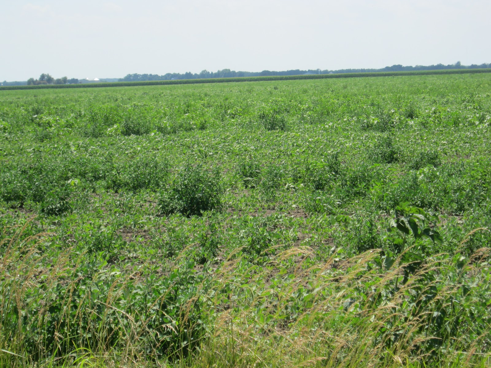 Observations in Agriculture: Weed Science Field Day